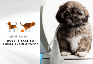 How long does it take to toilet train a puppy using a crate
