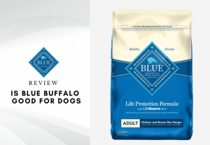 Is Blue buffalo safe for puppies - is blue buffalo good for dogs (1)