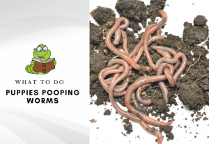 Puppies pooping worms - how to get rid of worms in puppies