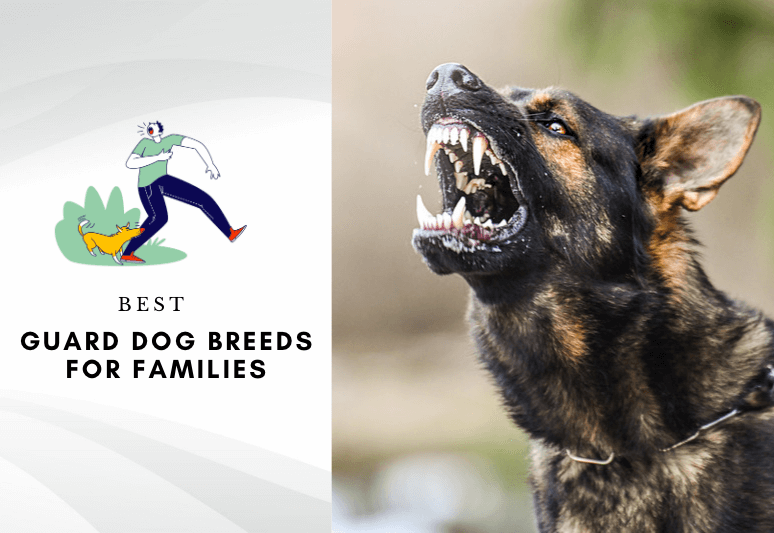 The 10 Best Guard Dog Breeds For Families & Home Protection-2