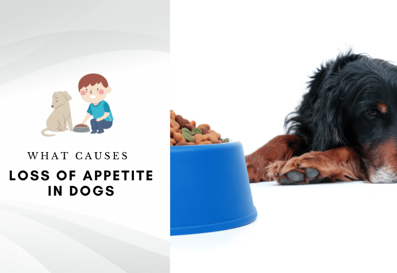 What Causes Loss of Appetite in Dogs – why my dog is not eating his food – home remedy for dog loss of appetite