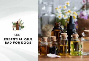 are essential oils bad for dogs – are essential oils harmful for dogs