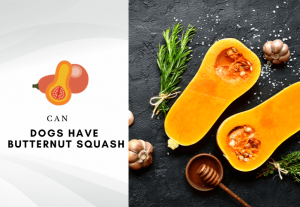 can dogs have butternut squash - Is butternut squash safe for dogs to eat -