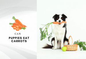 can puppies eat carrots - are carrots safe for dogs to eat