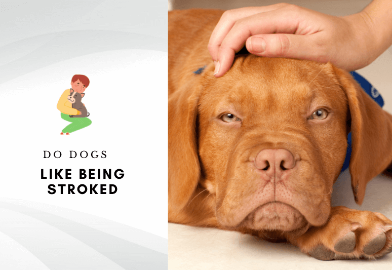 What do dogs feel when you pet - do dogs like being stroked - why dogs like being caressed