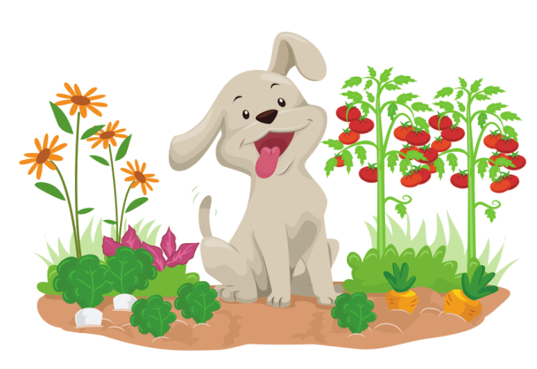 Which human foods can dogs eat – Which foods are safe for dogs