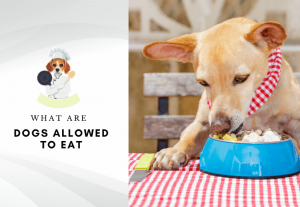 what are dogs allowed to eat - what human food can dogs eat 5