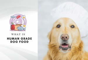 what is human grade dog food - is home grade food for dogs healthier (1)