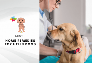 Best home remedies for UTI in dogs - urinary tract infection natural remedies (5)