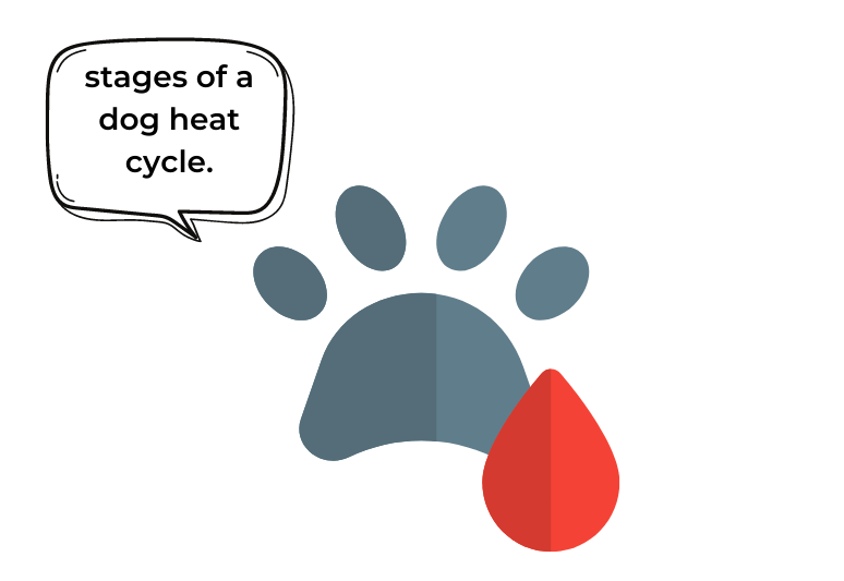 How to tell if a dog is in heat? (8 signs you should know) 1