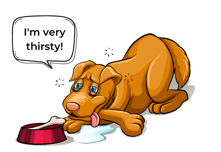 Dog not drinking water - symptoms of dehydration in dogs - what causes dehydration in dogs