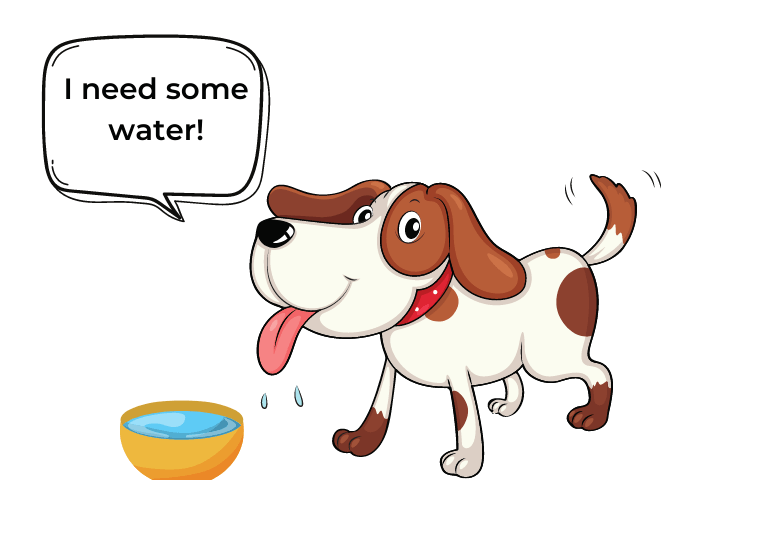 Dog not drinking water - how to tell if a dog is dehydrated (5)