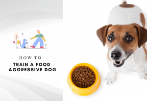 Food aggression in dogs - how to train a food aggressive dog