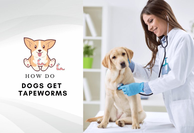 How Do Dogs Get tapeworms - treat and prevent tapeworm in dogs