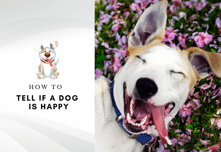 How to tell if a dog is happy - how to make a dog happier