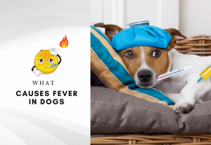 What Causes Fever in Dogs - 6 Signs and Symptoms of Dog Fever