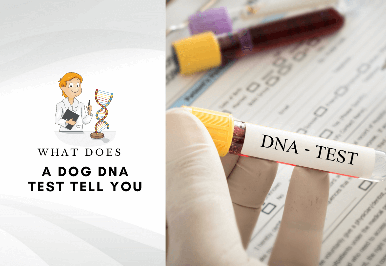 What does a dog DNA test tell you –What do dog DNA tests show