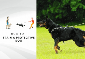 how to train an overprotective dog - how to train a protective dog