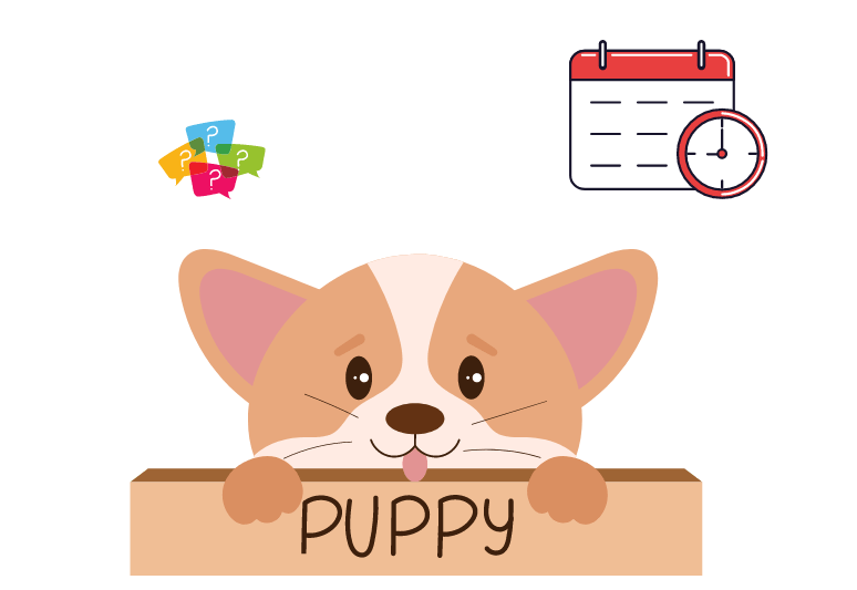 puppies age by teeth - How to tell how old a puppy is (1)
