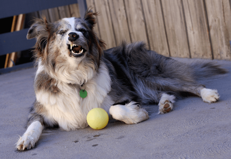 Why does my dog keep sneezing? (8 most common causes) 2