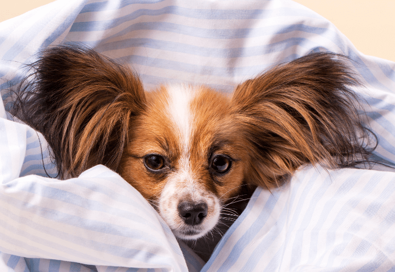 Why does my dog keep sneezing? (8 most common causes) 1