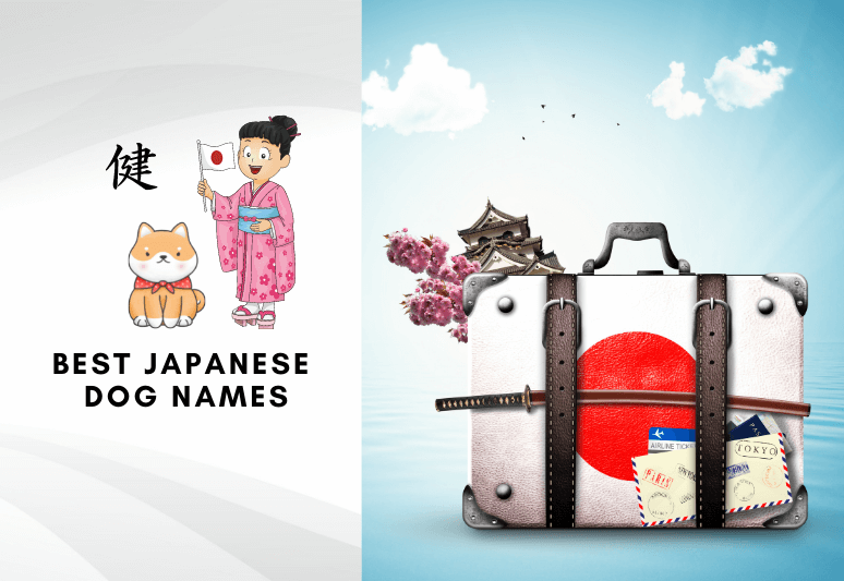 Best japanese dog names - Best oriental names for dogs in japanese languag