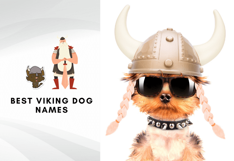 Best viking dog names - Best names for dogs in old norse language