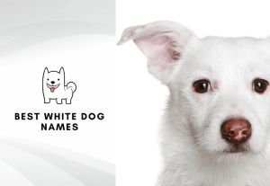 Best white dog names - Best names for gray dogs and white puppies