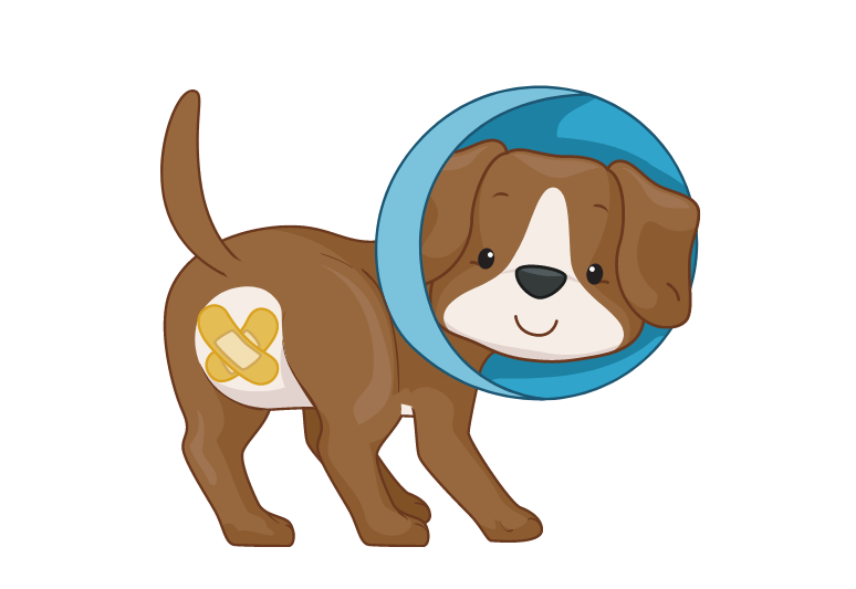 How to tell if a dog is spayed or fixed - how to know if a female dog is sterilized - benefits of spaying a dog (1)