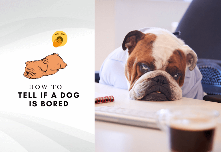 How to tell if your dog is bored - how to relieve dog boredom - boredom in dogs